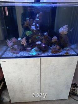 Limited Edition Red Sea Reefer 250